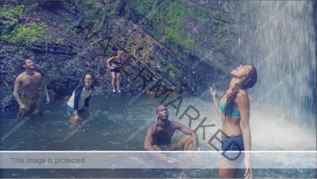 El Yunque Wildlife
