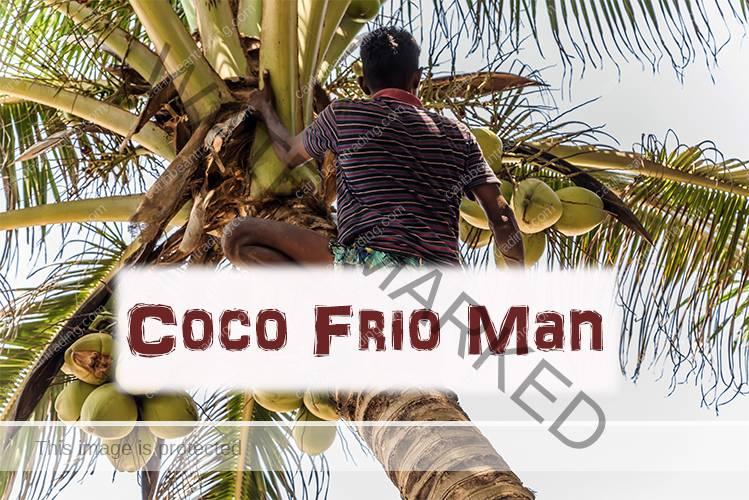 Man climbing a coconut tree