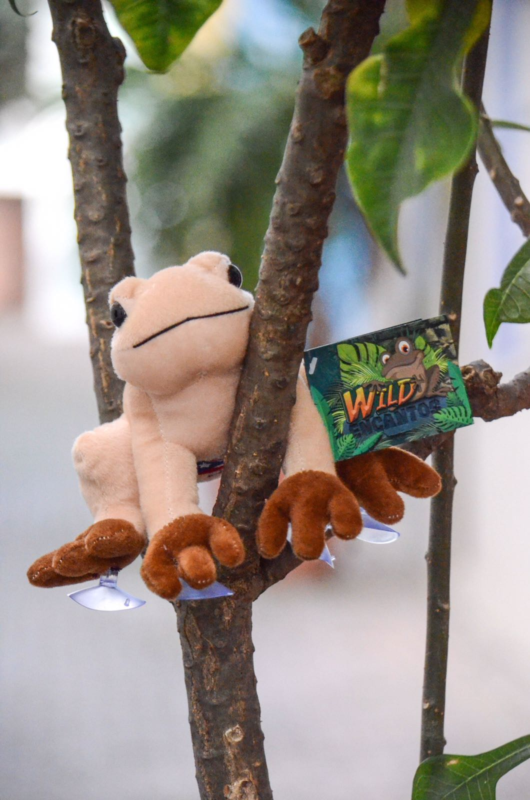 Coqui Stuffed Animal - with Suction