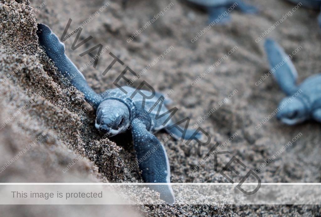 Sea Turtle Ecotourism Affect the Environment