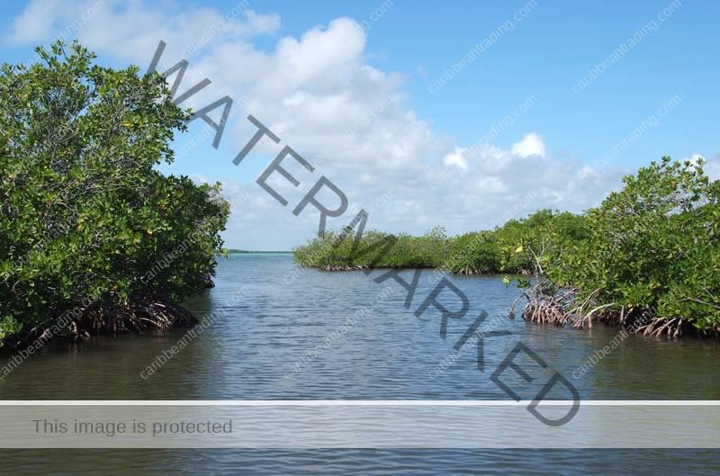 humacao reserve caribbean trading company