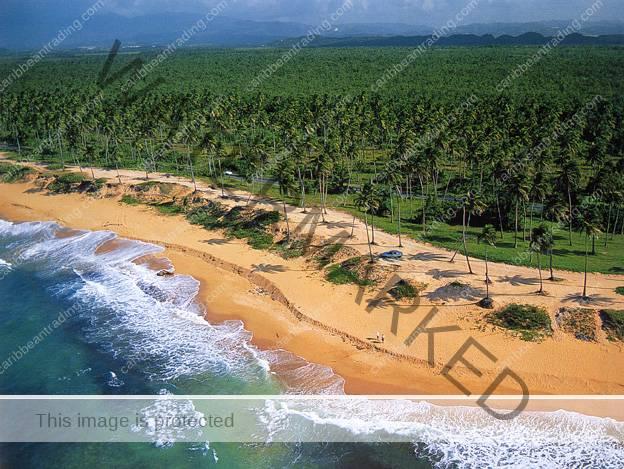 Loiza pinones caribbean trading company