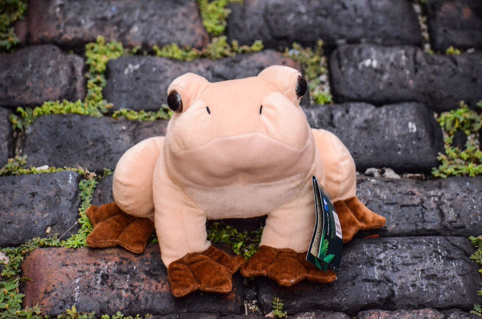 Large Coqui Plush - No Suction