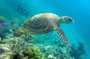 sea turtles puerto rico