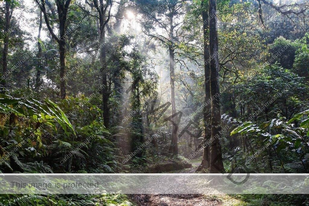 Ecotourism Affect the Environment